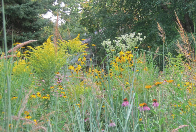 Grow native plants to attract butterflies bees and birds for Low maintenance native plants